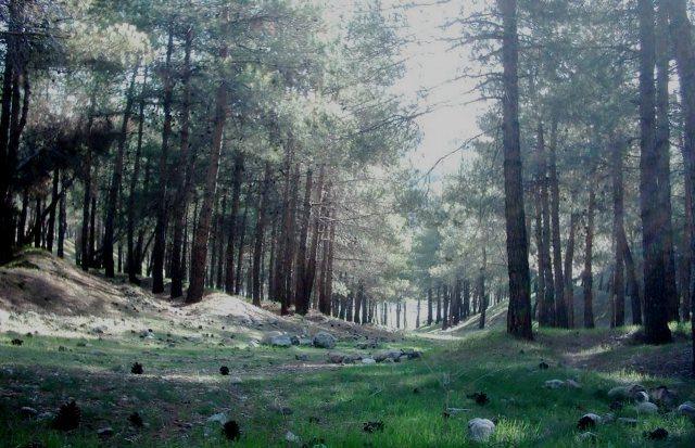 پارک جنگلی لویزان تهران - اجاره خودرو - اجاره ماشین